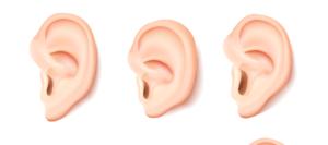 forma de las orejas